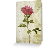 Peony No. 1 Greeting Card