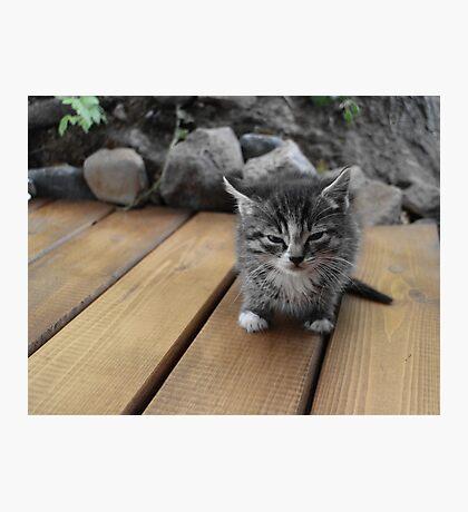 small fluffy gray kitten Photographic Print