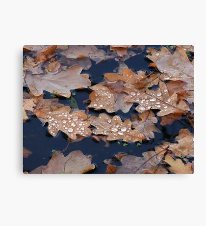 Oak Leaves in the Pond Canvas Print