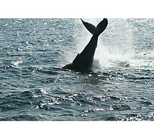Sparkling Whale Photographic Print