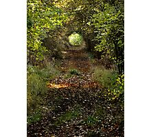Woodland Tunnel  Photographic Print