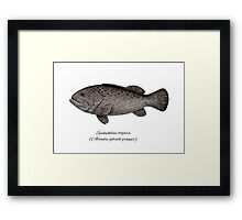Grouper goliath Framed Print