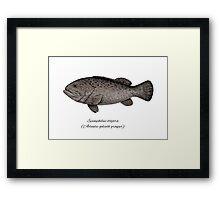 Grouper goliath Framed Print