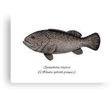Grouper goliath Canvas Print