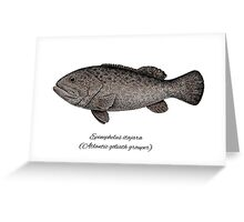 Grouper goliath Greeting Card