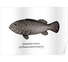Grouper goliath Poster