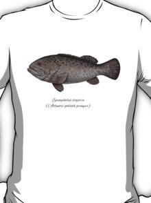 Grouper goliath T-Shirt
