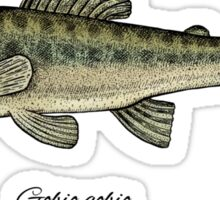 Minnow. Sticker