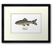 Minnow. Framed Print