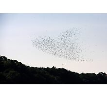 Birds of the Heart Photographic Print