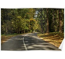 Road in forest Poster