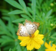 White butterfly on yellow flower Sticker