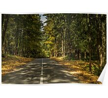The road between  trees Poster