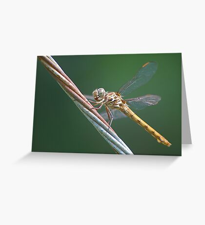 Amber dragon on guy-wire, Side Greeting Card