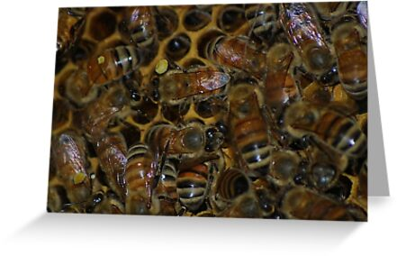 Honeybees in the hive by Ben Waggoner