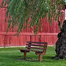 vacant bench under willow tree by Maria Dryfhout