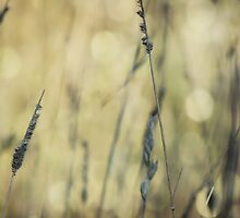 Wild Grasses 24 by vigor