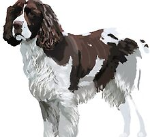 English Springer Spaniel Art  by Karen Harding