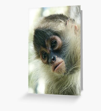 Pensive Young Spider Monkey Greeting Card