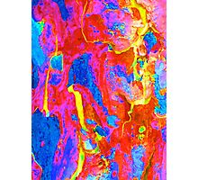 Spring Eucalypt Abstract 14 Photographic Print