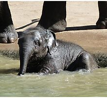 Baby Asian Elephant Enjoys Supervised Bathing Photographic Print