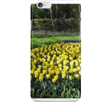 Bed of Yellow Tulips in the Keukenhof Gardens iPhone Case/Skin