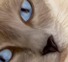 Frankie Blue Eyes Sticker