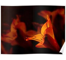 Lily in autumn colors Poster