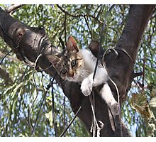 Bi-Color Tabby Cat In Tree 5 Photographic Print