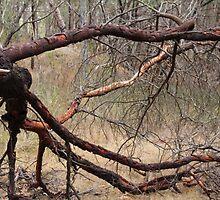 Fallen Acacia Tree Framing Grass by LisaGHunter