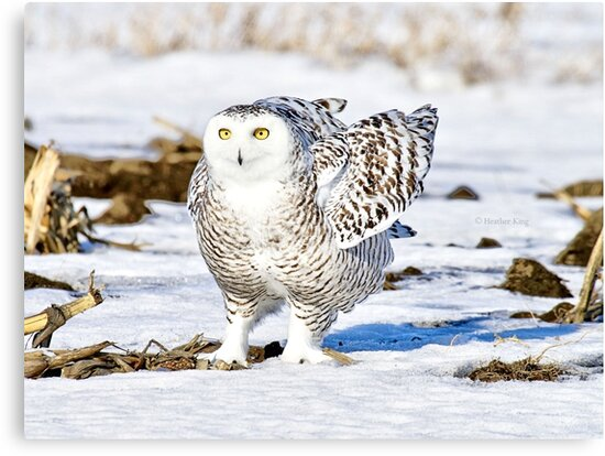 Practicing my chicken dance by Heather King
