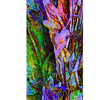 Spring Paperbark Tree Abstract Photographic Print