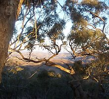 View from Horan's Track through the Murchison Gap Vic Aust by Margaret Morgan (Watkins)