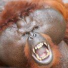 Aman the orang utan by Denzil