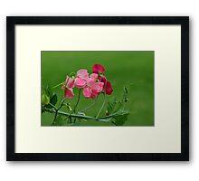 Sweet Peas in Spring Framed Print