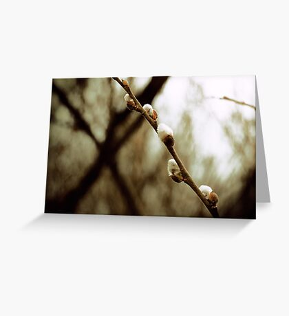 Spring Crossing Greeting Card