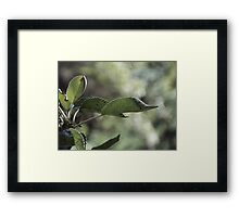 Growth. Framed Print