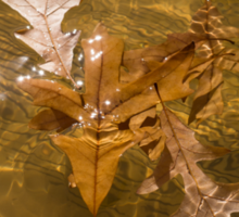 Honey Colored Sun Flares - Oak Leaves Floating in a Fountain Sticker