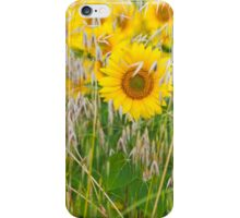 The live of the sunflowers 3 iPhone Case/Skin