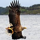 White Tailed Eagle by Per E. Gunnarsen