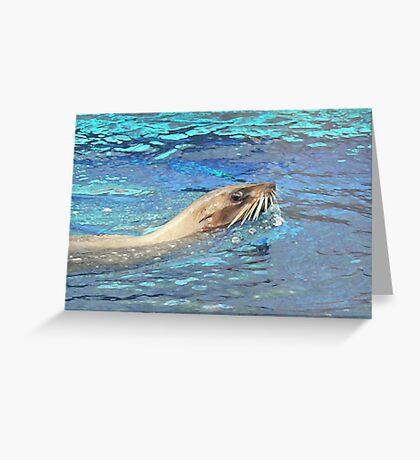 Australian Fur Seal Relaxing Greeting Card