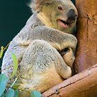 Koala Smile by Jeanne Peters