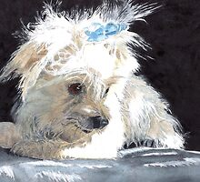 Maltese Pup by Yvonne Carter