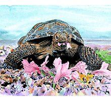 Roxy the Turtle Photographic Print