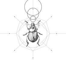 Dots, Lines & Beetle by byOli