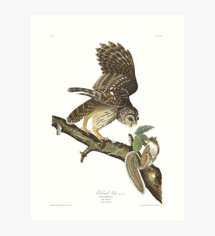 Barred Owl - John James Audubon Art Print