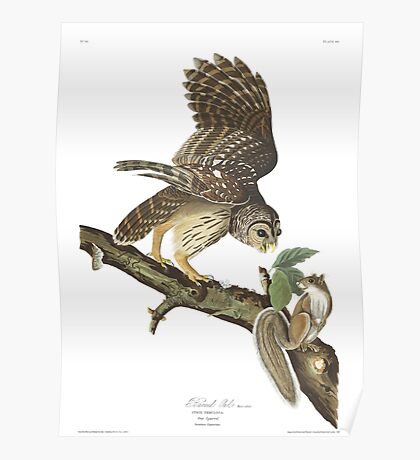 Barred Owl - John James Audubon Poster