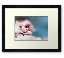 Blossom part 2 Framed Print
