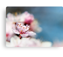 Blossom part 2 Canvas Print