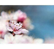Blossom part 2 Photographic Print